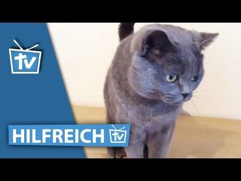 Katze kämmen - Fellpflege mit Katzenbürste