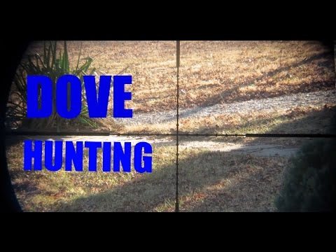 Dove Hunting W/ Air Rifle