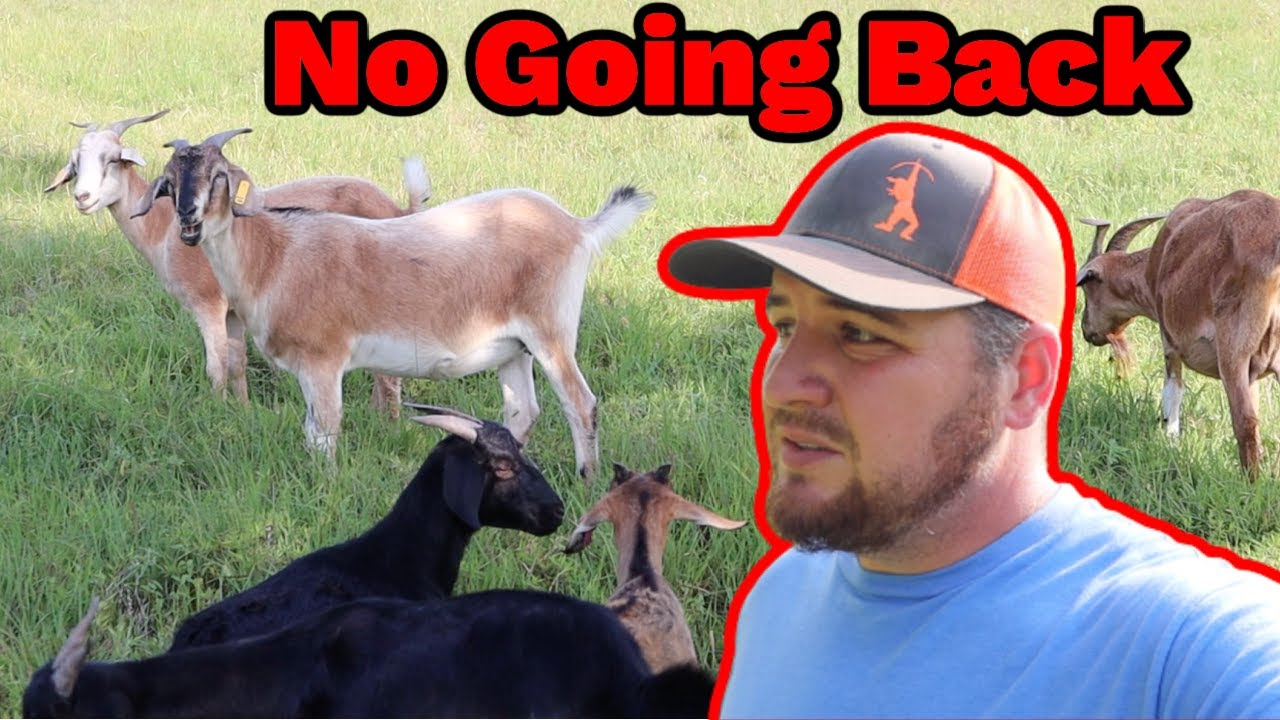 This Changes Everything, We Made a Decision For The Future Of Our Goat Farm!