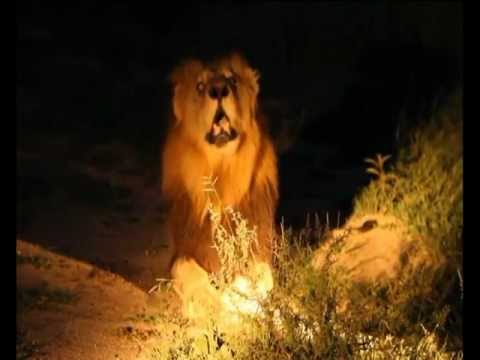Jesus Christ Lion Of The Tribe Of Judah Youtube