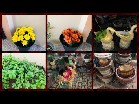 My Home Organic Garden in Qatar | visit to Garden in Um Salal Mohammed