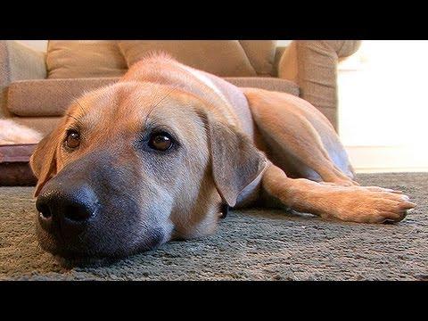Understanding Canine Allergies