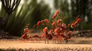 Birlikten kuvvet doğar | Karıncalar