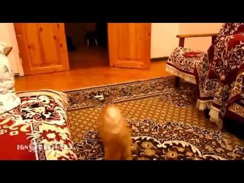 Smart Cats Video