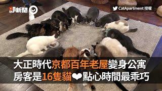大正時代京都百年老屋變身公寓 房客是16隻貓 |旅遊|日本|寵物咖啡廳