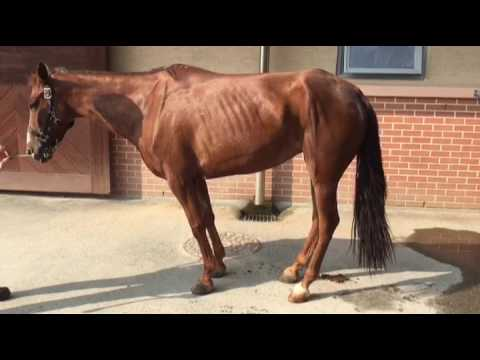 equine motor neuron disease after sedation youtube