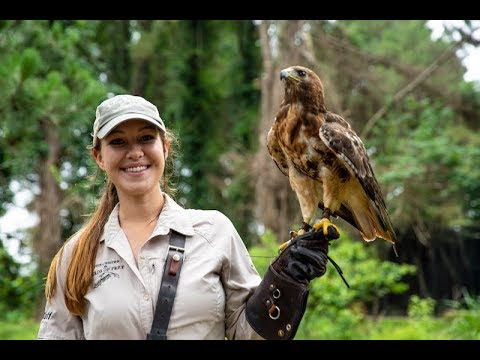 Partnering-to-Protect-The-Center-for-Birds-of-Prey