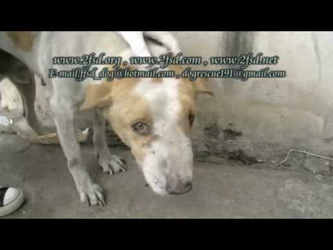 Dog rescue 191 Nasal VG. Tumor บื้อ สุวินทวงศ์6