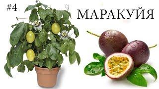 видео Выращивание экзотических растений в домашних условиях / ТПК «Аква-Сервис»