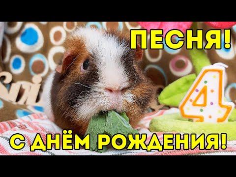 ПЕСНЯ SvinkiShow – КРАСАВЧИК НАШ (Премьера клипа, 2020)