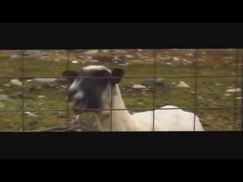 Taylor Swift - I Knew You Were Trouble Goat Edition | 1 HOUR | [NEW VERSION] | HD |