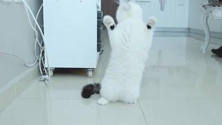Dancing cats - Танцующие коты