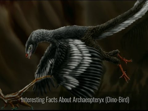 Interesting Facts About Archaeopteryx