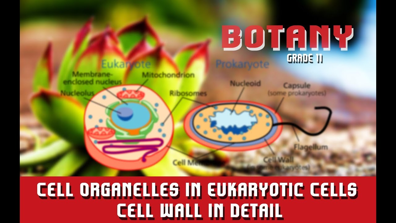 Cell Organelles In Eukaryotic Cells