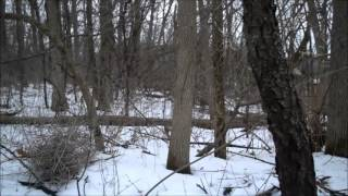 Bigfoot Sighting Minnesota - WHITE SASQUATCH