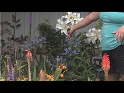 Outdoor Gardening : How to Take Care of Outdoor Plants