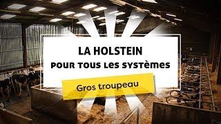 La Holstein pour tous les systèmes : gros troupeau