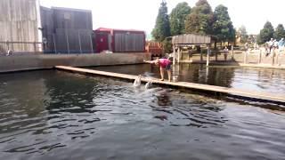 Басен з дельфінами, годування дельфінів №2 у Dolfinarium в місті 3841AB Harderwijk в Nedrland