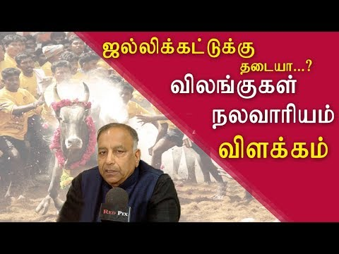 Jallikattu in chennai | new guidelines soon tamil live news, tamil news today, tamil, latest tamil news, redpix    tamil news today CHENNAI: The Animal Welfare Board of India (AWBI) is framing guidelines for holding jallikattu (bull taming) in Tamil Nadu, said AWBI chairman S P Gupta on Friday.  During his first visit to Chennai after taking over as AWBI chairman, Gupta said,