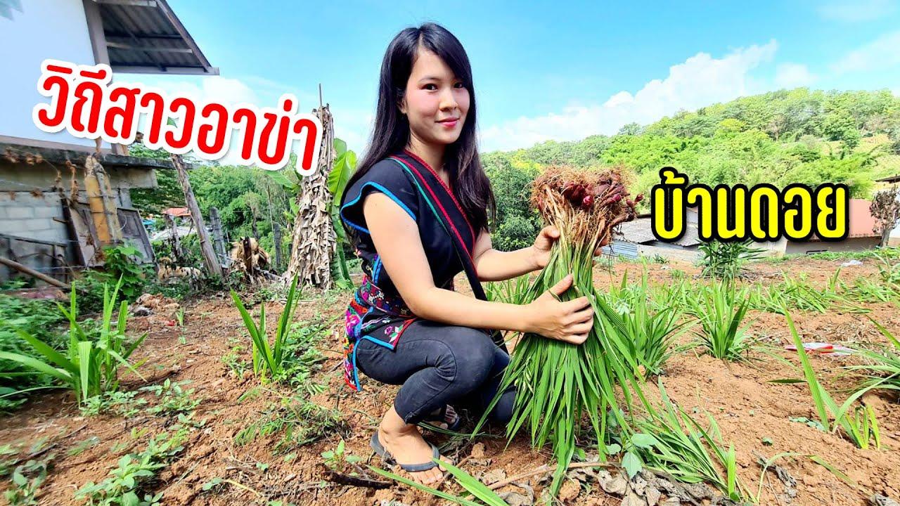 เจอกันครั้งแรกสาวอาข่าสายรุ้งคนสวยพาชมสวนพืชผักที่บ้านเตรียมทำเมนูชนเผ่า #วิถีฤดูฝน21