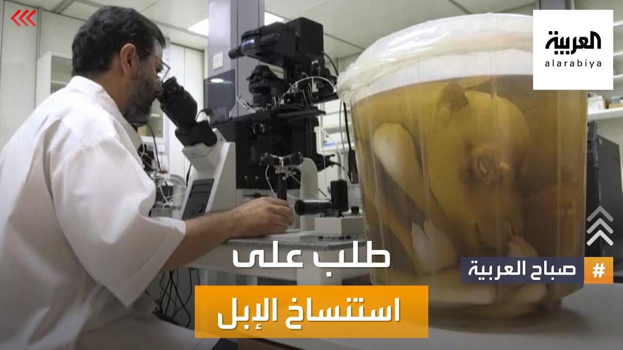 صباح العربية | الاستنساخ للإبل المميزة في الإمارات  - نشر قبل 3 ساعة