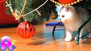 🎀 TOYS FOR KITTENS 🍄 🚀 Funny video about kitty Masy