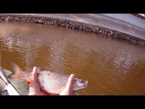 Ловля голавля на виб (раттлин).Chub Fishing.