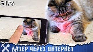 Игрушка для кота через интернет своими руками