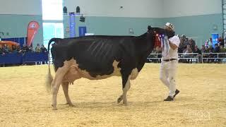 Suprême Laitier 2017 - Production à vie - Holstein