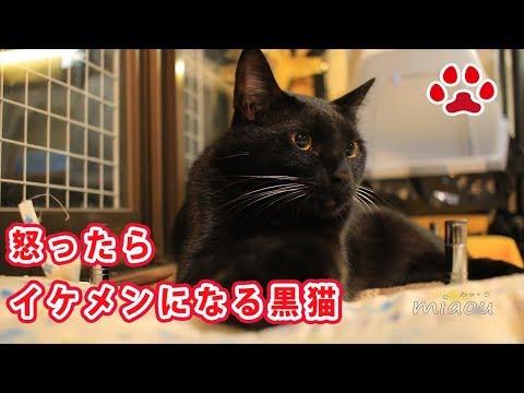 悪さをして怒られた時のくろの様子 A black cat when he got scolded and made angry