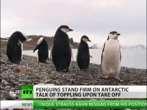 Penguin Flip-Flops: Reality or Myth?