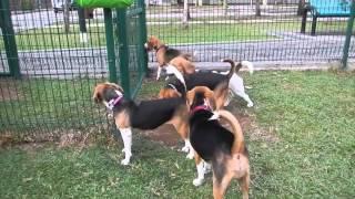 Singapore Beagle Club Meetup