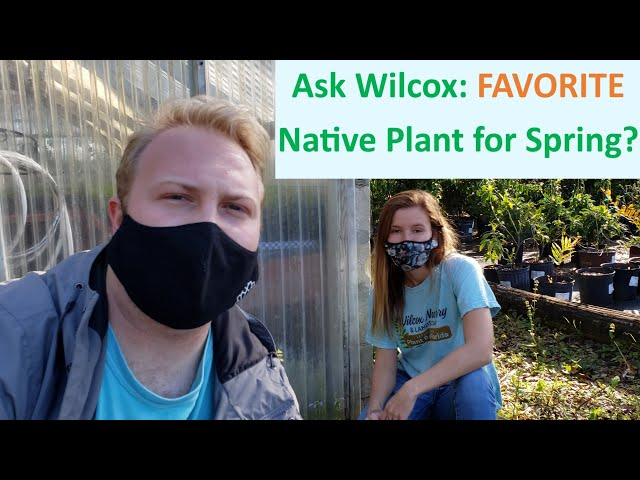Ask Wilcox: What's your FAVORITE Native Plant for Spring?