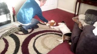 Simon Cowell's Best Friend Holly From Cheshire Dog's Home