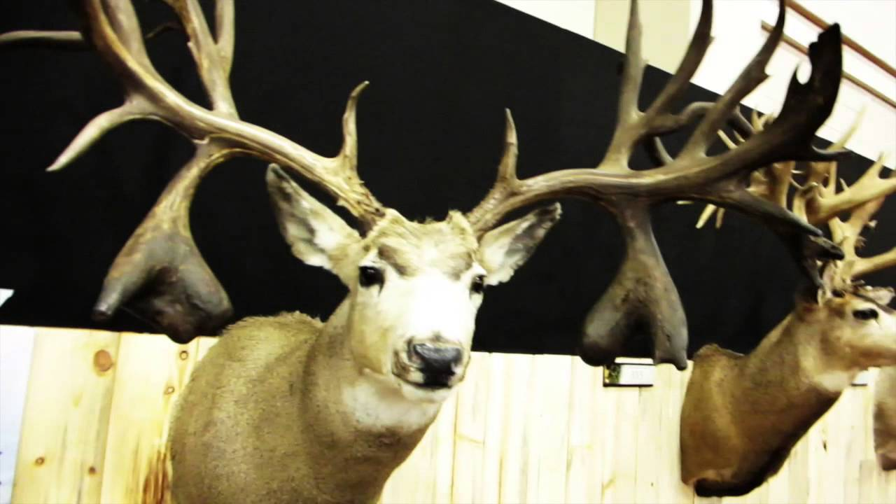 World Record Mule Deer Sheds Youtube