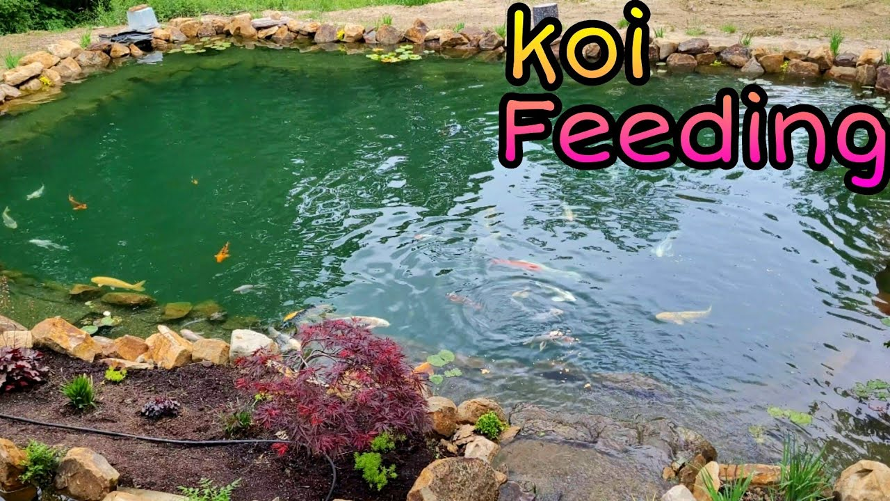 35,000 gallon pond - 4K -new plants - new grass