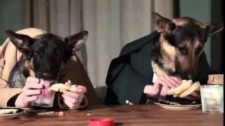 Самый ржачный прикол с собаками  прикол с псом  новое смешное видео про животных  сборник  2014