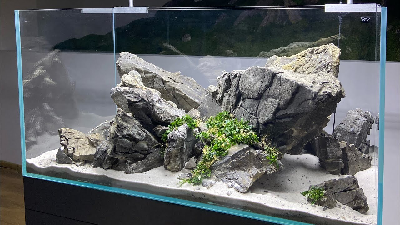 Ancient Stone & Anubias