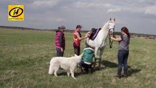 Дистанционные конные пробеги, агроусадьба Тивидовка