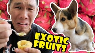 COMPARING EXOTIC FRUITS From Around the WORLD  Life After College: Ep. 503