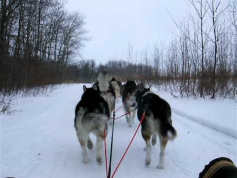 dog sledding in Fond Du Lac, Wisconsin