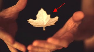 Magic of Nature! Magic Trick with Canadian maple leaf by Magician Ryan Joyce