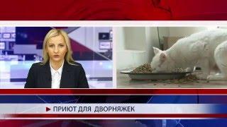 Первый в Чечне приют для животных
