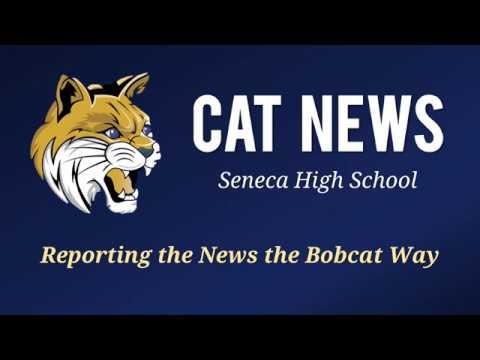 Cat News Broadcast (October 31, 2017)