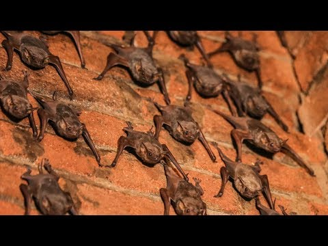The Lady Who Lives With 500 Bats