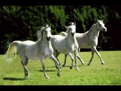 Andrew Bird - Three White Horses 2012