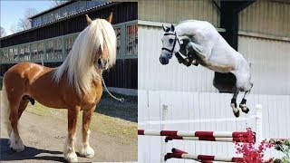 Download Cute And funny horse Videos Compilation cute moment of the horses   Cutest Horse #15 Mp3 and Videos