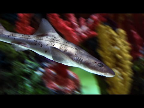 Stocking Your Tank? This Is How You Shop for Sharks | Tanked
