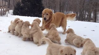 Mama Dog Plays With Her Puppies | Puppy Pile