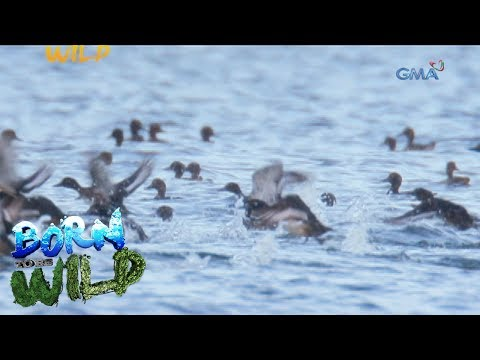 Born to Be Wild: The return of migratory birds in the Philippines